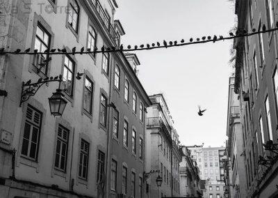 Invasión en el aire